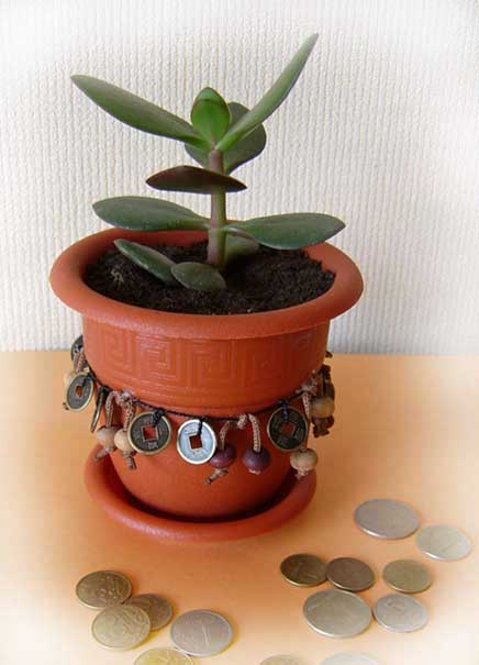 денежный цветок фото: