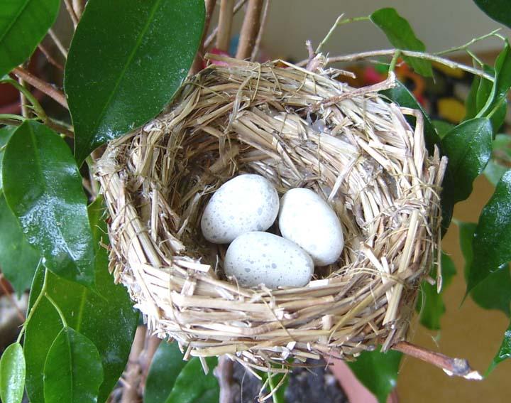 Как сделать гнездо для канарейки своими руками